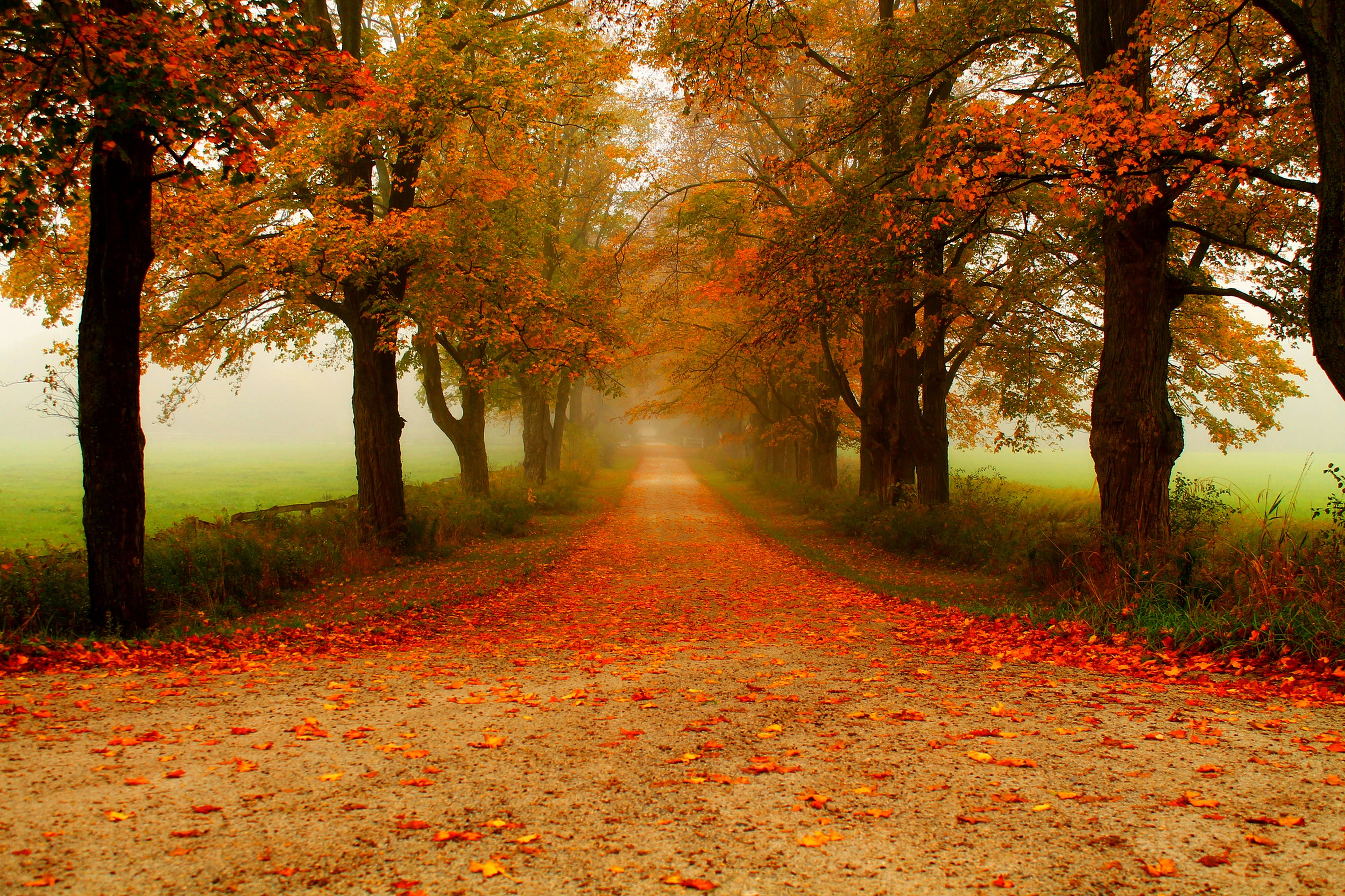 Autumn_Parks_Trees_456178