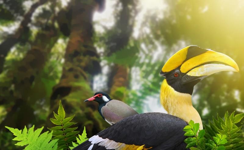Langkawi_Bird_Watching_zpse2e57d17-e1423222449232