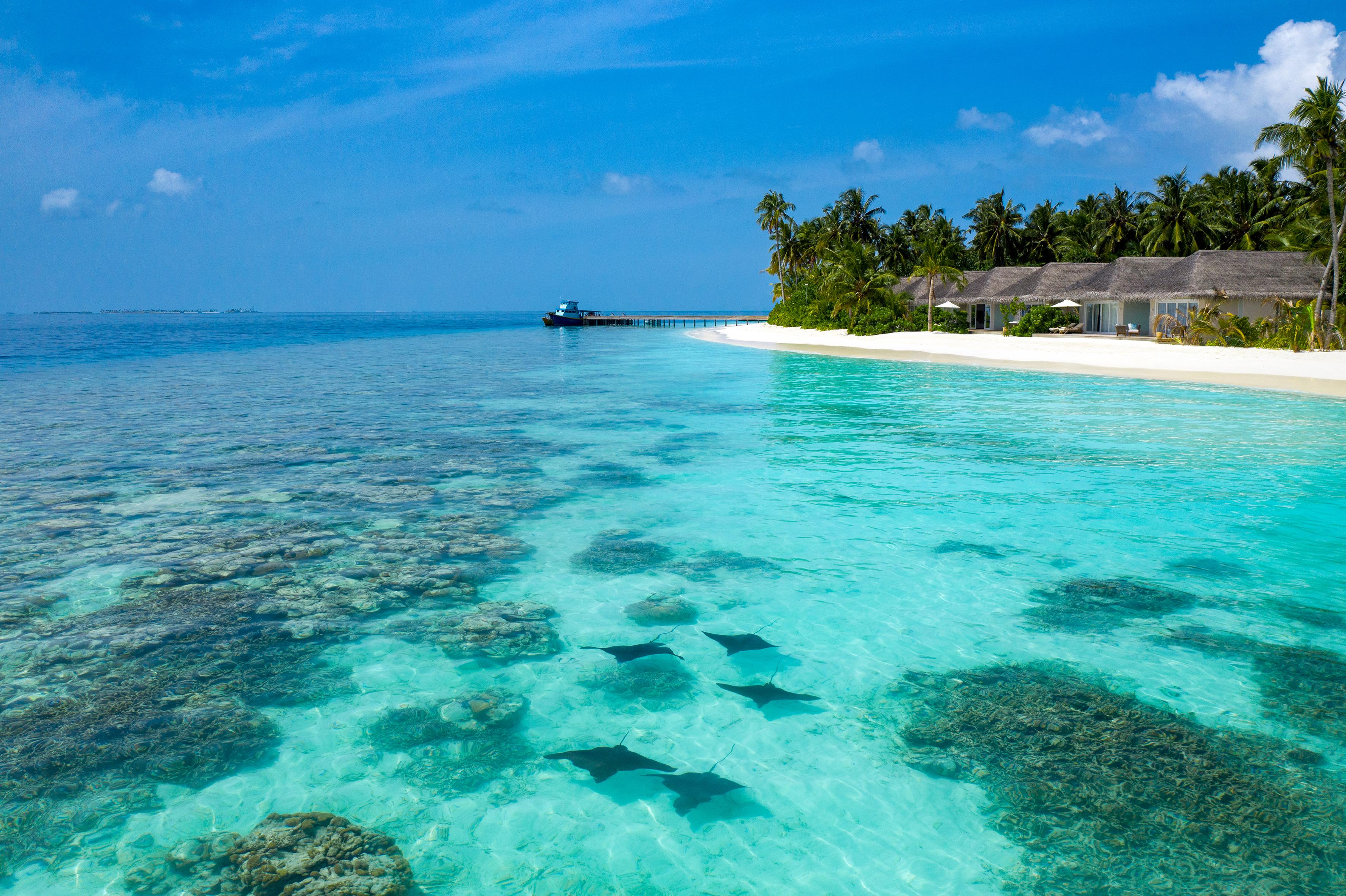 Baglioni_Resort _Maldives_eagle_ray